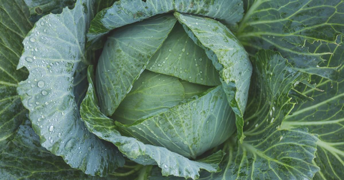 Frisk frugt & grønt